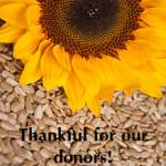 thankful_sunflower-seeds-web