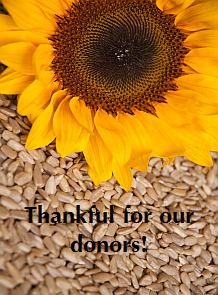 thankful_sunflower-seeds-web